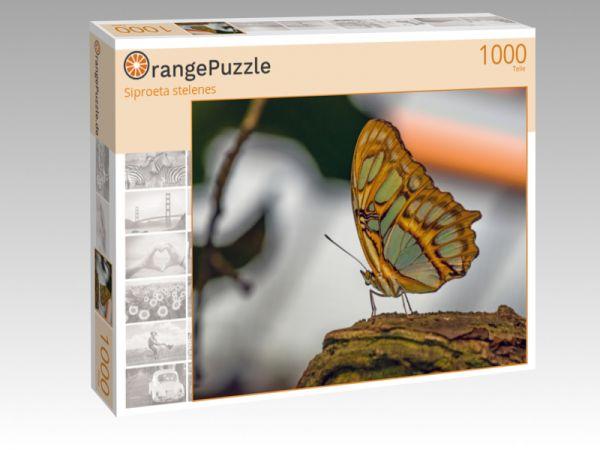 """Puzzle Motiv """"Siproeta stelenes"""" - Puzzle-Schachtel zu 1000 Teile Puzzle"""