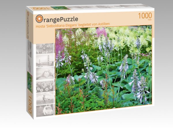 """Puzzle Motiv """"Hosta 'Sieboldiana Elegans' begleitet von Astilben"""" - Puzzle-Schachtel zu 1000 Teile Puzzle"""
