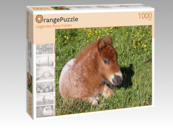 """Puzzle Motiv """"Liegendes Pony-Fohlen"""" - Puzzle-Schachtel zu 1000 Teile Puzzle"""