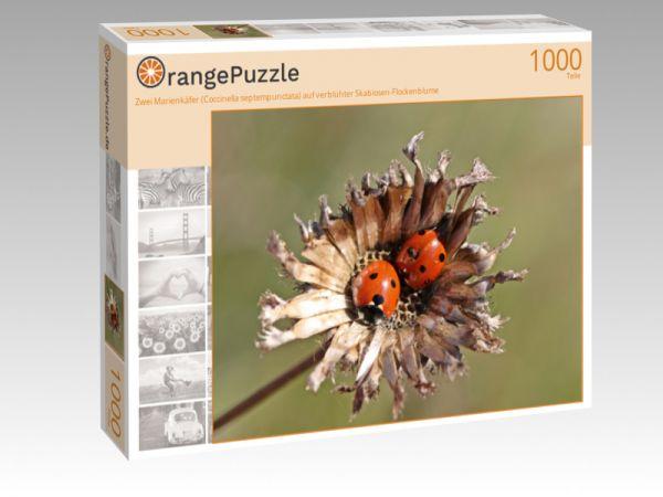 """Puzzle Motiv """"Zwei Marienkäfer (Coccinella septempunctata) auf verblühter Skabiosen-Flockenblume"""" - Puzzle-Schachtel zu 1000 Teile Puzzle"""