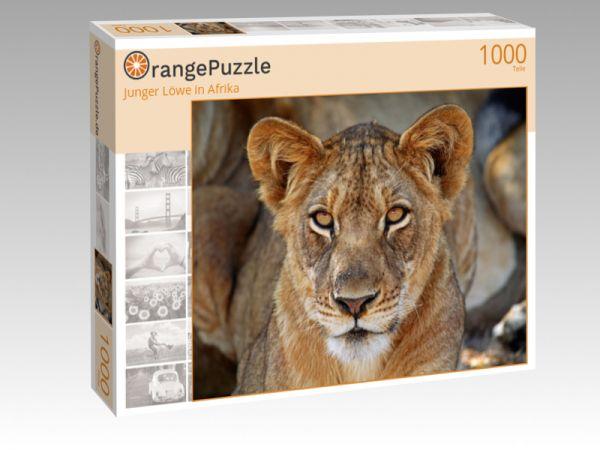 """Puzzle Motiv """"Junger Löwe in Afrika"""" - Puzzle-Schachtel zu 1000 Teile Puzzle"""