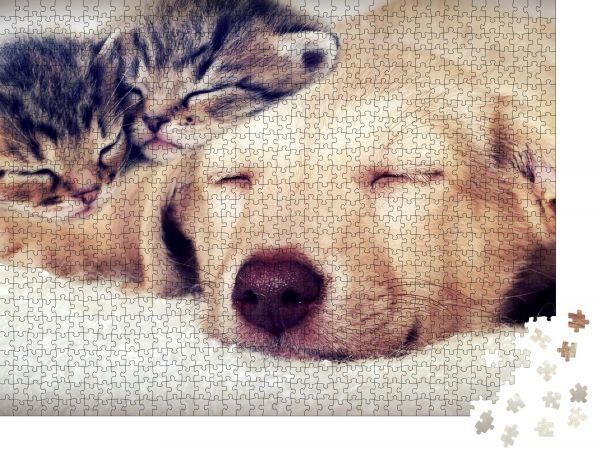 """Puzzle-Motiv """"Welpe und Kätzchen im Schlaf"""" - Puzzle-Schachtel zu 1000 Teile Puzzle"""