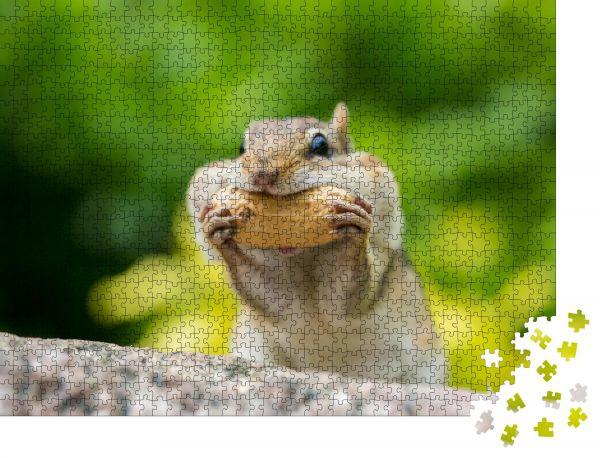 """Puzzle-Motiv """"Chipmunk stopft Lebensmittel in den Mund"""" - Puzzle-Teile zu 1000 Teile Puzzle"""