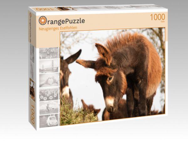 """Puzzle Motiv """"Neugieriges Eselfohlen"""" - Puzzle-Schachtel zu 1000 Teile Puzzle"""
