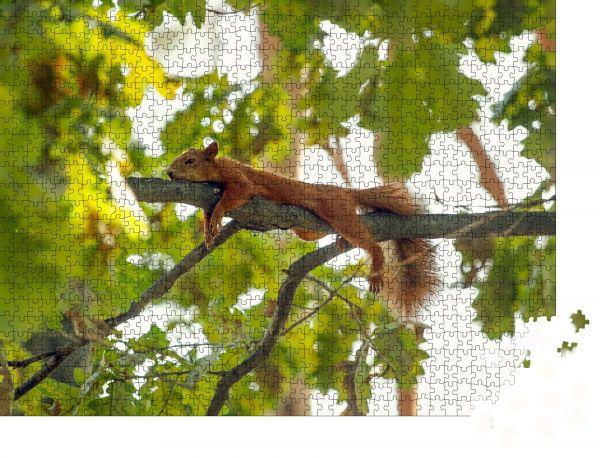 """Puzzle-Motiv """"Müde Eichhörnchen liegend auf dem Ast. Eichhörnchen ruhen sich aus"""" - Puzzle-Teile zu 1000 Teile Puzzle"""