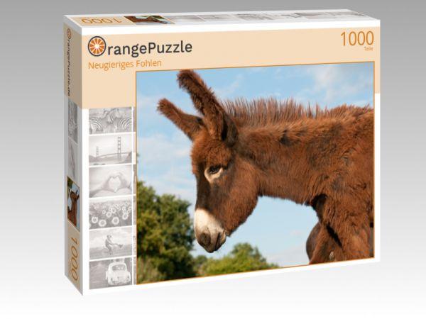 """Puzzle Motiv """"Neugieriges Fohlen"""" - Puzzle-Schachtel zu 1000 Teile Puzzle"""