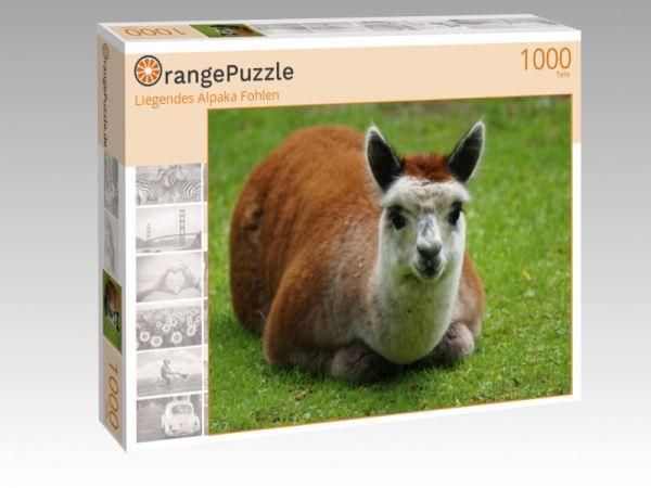 "Puzzle Motiv ""Liegendes Alpaka Fohlen"" - Puzzle-Schachtel zu 1000 Teile Puzzle"