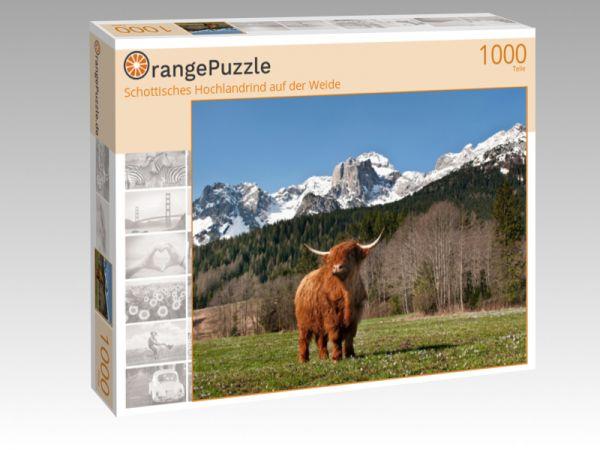 """Puzzle Motiv """"Schottisches Hochlandrind auf der Weide"""" - Puzzle-Schachtel zu 1000 Teile Puzzle"""
