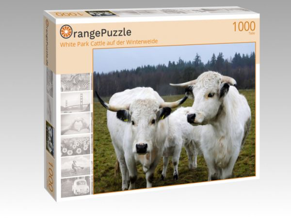 """Puzzle Motiv """"White Park Cattle auf der Winterweide"""" - Puzzle-Schachtel zu 1000 Teile Puzzle"""