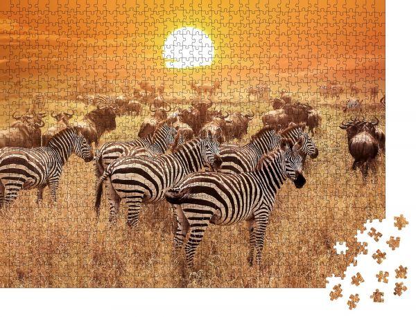 "Puzzle-Motiv ""Zebra bei Sonnenuntergang im Serengeti Nationalpark. Afrika. Tansania"" - Puzzle-Schachtel zu 1000 Teile Puzzle"
