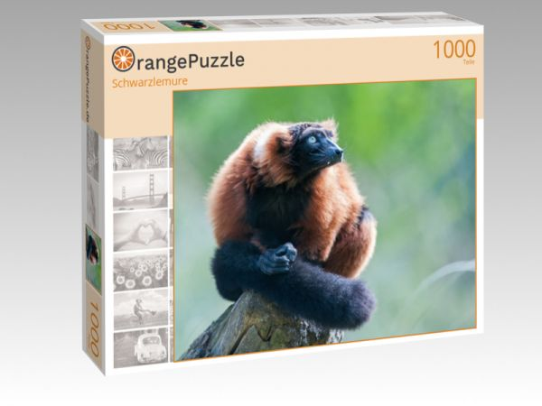"""Puzzle Motiv """"Schwarzlemure"""" - Puzzle-Schachtel zu 1000 Teile Puzzle"""