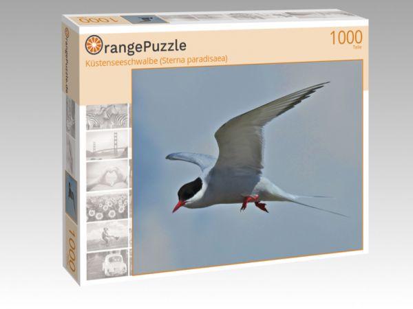 """Puzzle Motiv """"Küstenseeschwalbe (Sterna paradisaea)"""" - Puzzle-Schachtel zu 1000 Teile Puzzle"""