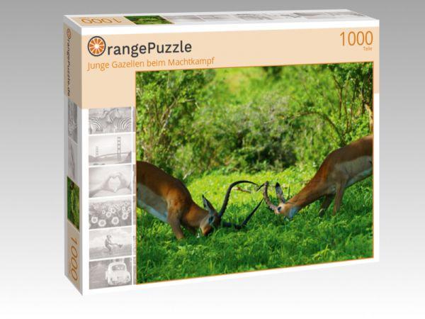 """Puzzle Motiv """"Junge Gazellen beim Machtkampf"""" - Puzzle-Schachtel zu 1000 Teile Puzzle"""