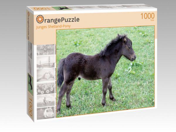 """Puzzle Motiv """"Junges Shetland-Pony"""" - Puzzle-Schachtel zu 1000 Teile Puzzle"""