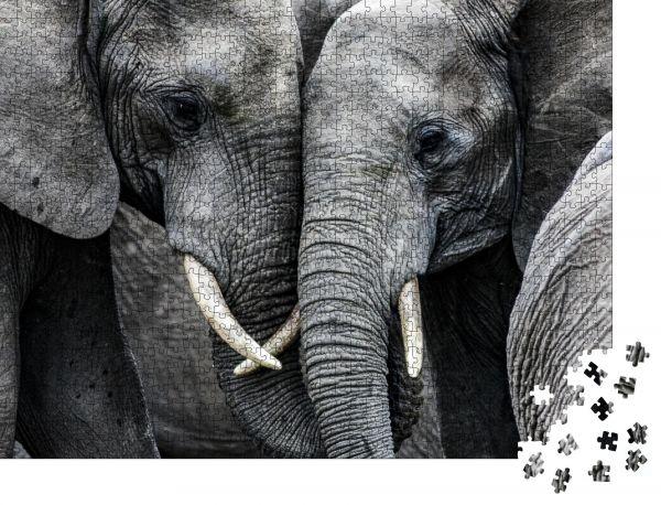 """Puzzle-Motiv """"Elefanten"""" - Puzzle-Schachtel zu 1000 Teile Puzzle"""