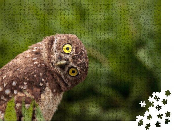 """Puzzle-Motiv """"Lustige grabende Eule Athene cunicularia neigt ihren Kopf außerhalb ihres Baues"""" - Puzzle-Teile zu 1000 Teile Puzzle"""