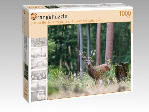 """Puzzle Motiv """"Juli: Der Beihirsch reagiert sich im Wald am Gebüsch ab."""" - Puzzle-Schachtel zu 1000 Teile Puzzle"""