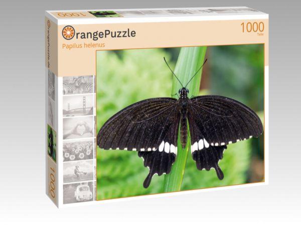 """Puzzle Motiv """"Papilus helenus"""" - Puzzle-Schachtel zu 1000 Teile Puzzle"""
