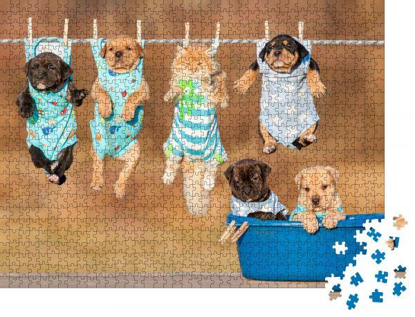 """Puzzle-Motiv """"Lustige Gruppe von amerikanischen Staffordshire Terrier-Welpen mit einer kleinen roten Katze"""" - Puzzle-Teile zu 1000 Teile Puzzle"""