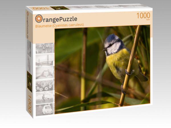 """Puzzle Motiv """"Blaumeise (Cyanistes caeruleus)"""" - Puzzle-Schachtel zu 1000 Teile Puzzle"""