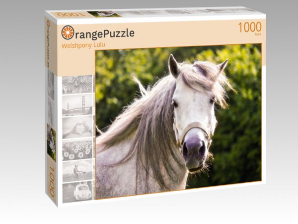 "Puzzle Motiv ""Welshpony Lulu"" - Puzzle-Schachtel zu 1000 Teile Puzzle"