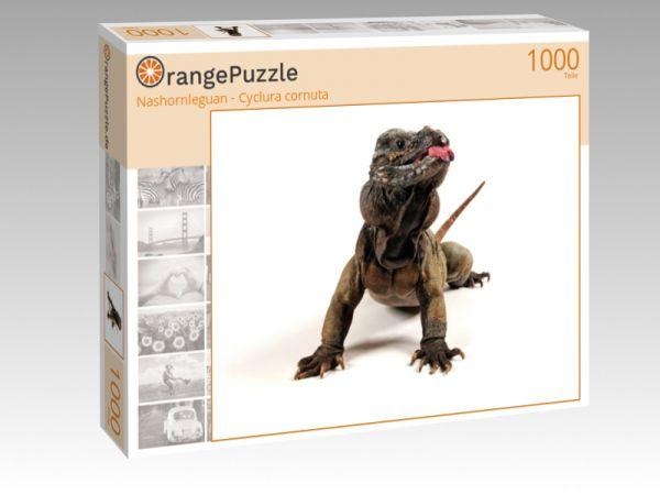 "Puzzle Motiv ""Nashornleguan - Cyclura cornuta"" - Puzzle-Schachtel zu 1000 Teile Puzzle"