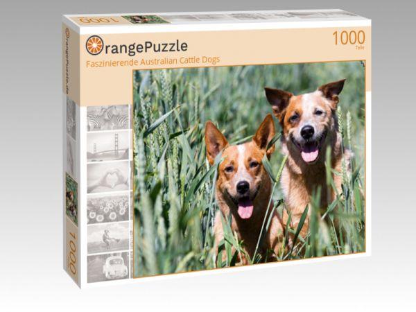 """Puzzle Motiv """"Faszinierende Australian Cattle Dogs"""" - Puzzle-Schachtel zu 1000 Teile Puzzle"""