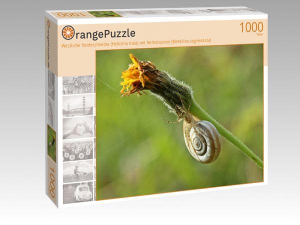 """Puzzle Motiv """"Westliche Heideschnecke (Helicella itala) mit Herbstspinne (Metellina segmentata)"""" - Puzzle-Schachtel zu 1000 Teile Puzzle"""