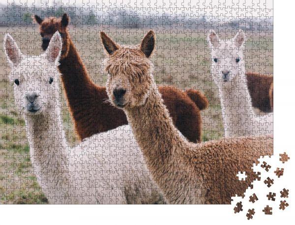 """Puzzle-Motiv """"Bunte Gruppe / Packung Alpakas"""" - Puzzle-Schachtel zu 1000 Teile Puzzle"""