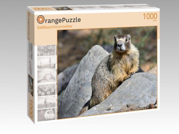 """Puzzle Motiv """"Gelbbauchmurmeltier"""" - Puzzle-Schachtel zu 1000 Teile Puzzle"""
