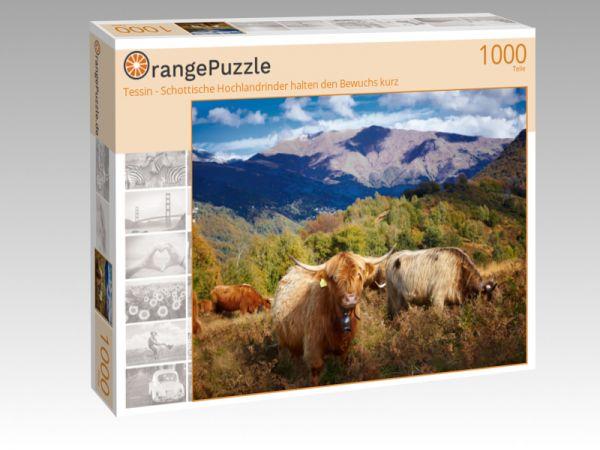 """Puzzle Motiv """"Tessin - Schottische Hochlandrinder halten den Bewuchs kurz"""" - Puzzle-Schachtel zu 1000 Teile Puzzle"""