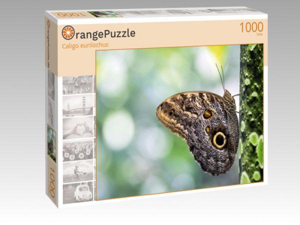 """Puzzle Motiv """"Caligo eurilochus"""" - Puzzle-Schachtel zu 1000 Teile Puzzle"""