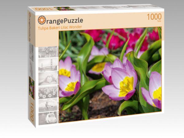 """Puzzle Motiv """"Tulipa Bakeri Lilac Wonder"""" - Puzzle-Schachtel zu 1000 Teile Puzzle"""