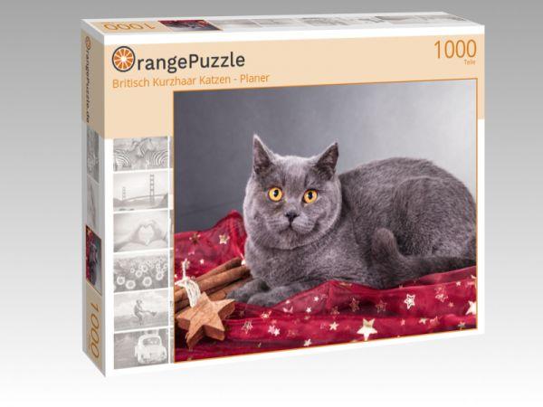 """Puzzle Motiv """"Britisch Kurzhaar Katzen - Planer"""" - Puzzle-Schachtel zu 1000 Teile Puzzle"""