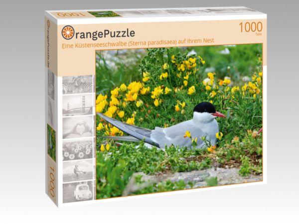 """Puzzle Motiv """"Eine Küstenseeschwalbe (Sterna paradisaea) auf ihrem Nest"""" - Puzzle-Schachtel zu 1000 Teile Puzzle"""