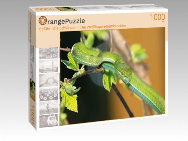 Puzzle Gefahrliche Schlangen Die Weisslippen Bambusotter