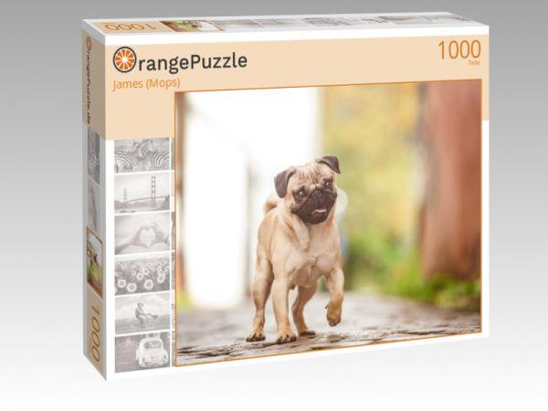 """Puzzle Motiv """"James (Mops)"""" - Puzzle-Schachtel zu 1000 Teile Puzzle"""